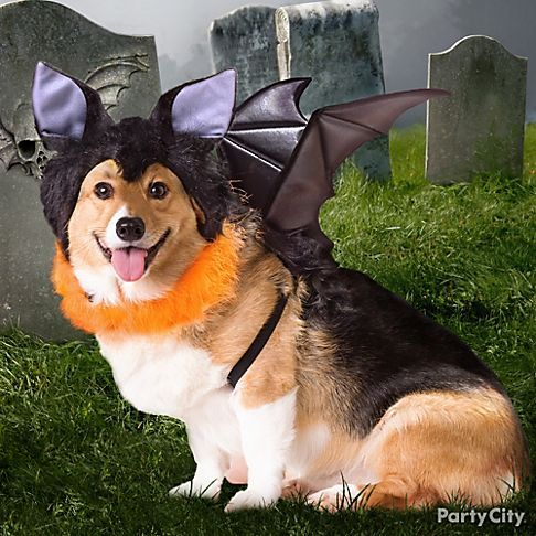 Dress Your Dog As A Bat Complete With Pointy Ears And Wings For A