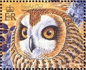 Fearful Owl (Nesasio solomonensis)