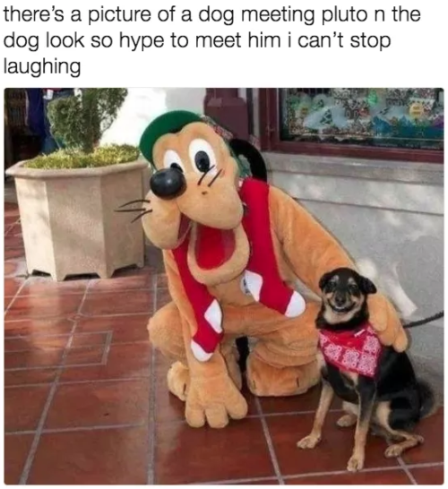 28 Hilarious Dog Memes For 2018 Funny Dog Pictures Cute Animals Funny Animal Pictures