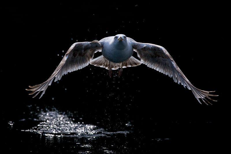 Epingle Par Alexandre L Sur Animaux Animaux Faune Oiseaux