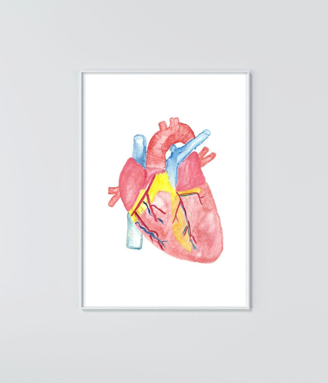 Watercolor Heart Anatomy Print   Human Anatomy   Pinterest   Heart ...