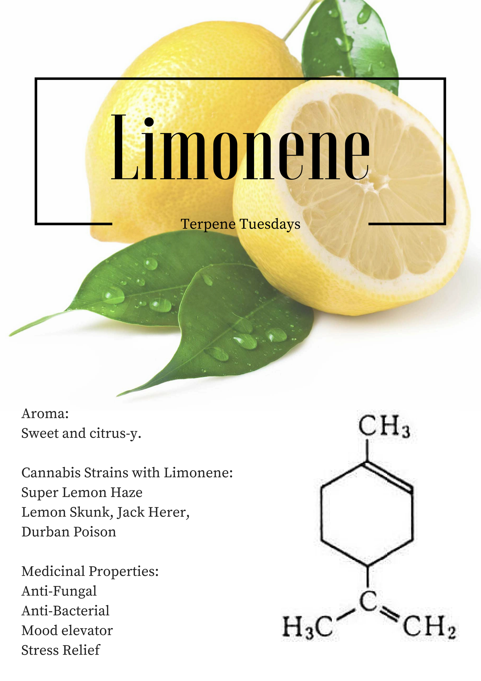 Pin on The 5 Types Of Cannabis Terpenes
