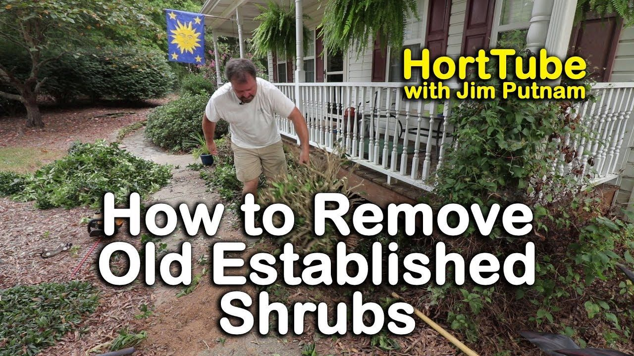 How to Remove Old Established Shrubs (Digging Out Well ...