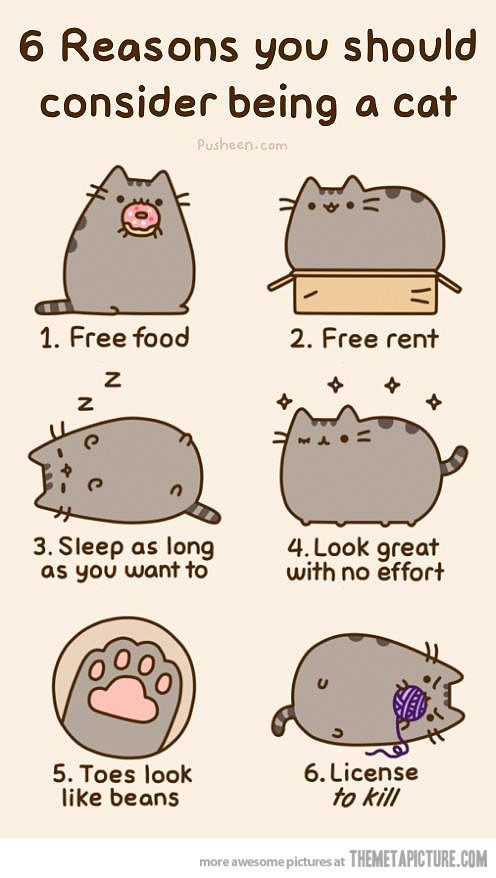 6 Reasons You Should Consider Being A Cat 1 Free Food 2 Free