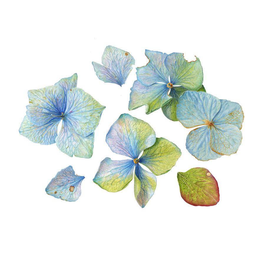 Folio illustration agency london uk carolyn jenkins for Botanical tattoo london