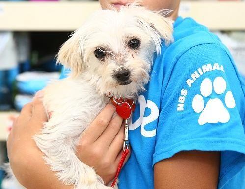 Adopt Eldon on Terrier mix dogs, Animal rescue, Eldon