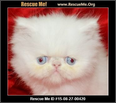 ― Florida Persian Rescue ― ADOPTIONS ― RescueMe.Org