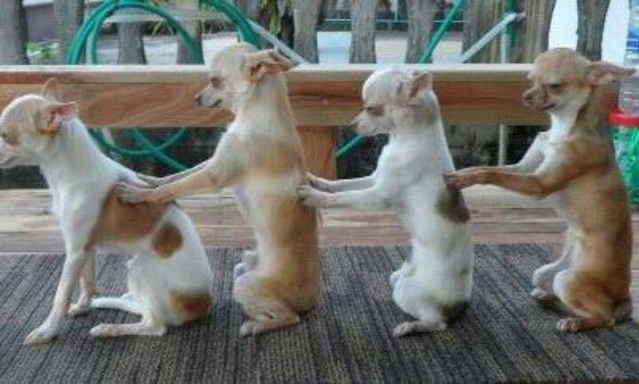 Dog River Blues - Line Dance (Dance & Teach in English ... |Dog Line Dance