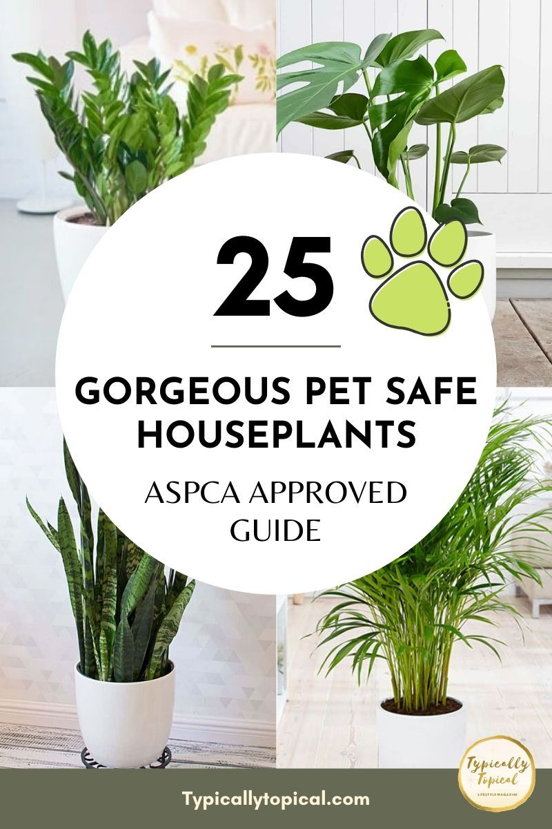 25 Gorgeous House Plants Safe for Cats and Dogs | Pet Safe Houseplants