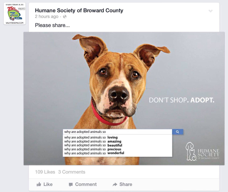 Humane Society of Broward County Humane society, Pet