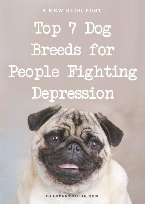 Top 7 Dog Breeds For People Fighting Depression Furry Friends