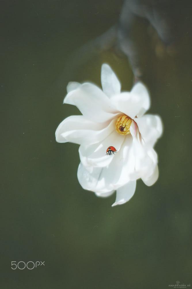Reverie By Anastasia Ri 500px Flower Photos Flowers Reverie