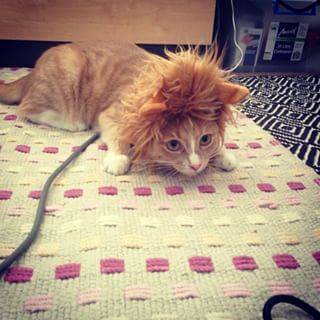 And This Little Lion Wannabe Who S Ready To Make The Kill Kitty