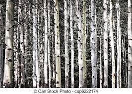 Resultado de imagem para arvores troncos