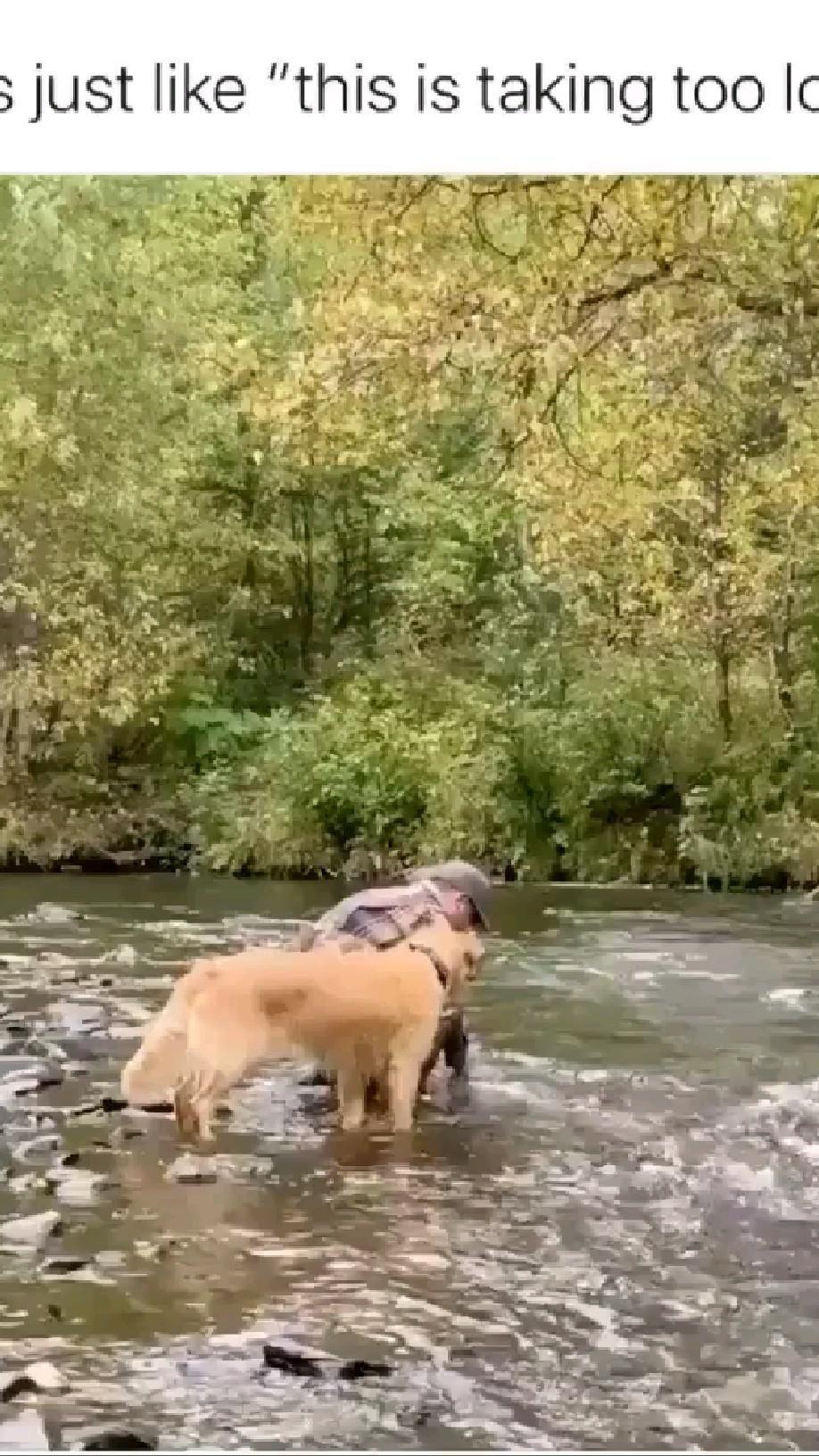 Dog Fishing