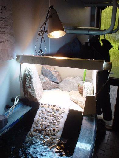 Zona emersa con sassi basking area idea diy turtlette for Sassi per tartarughe