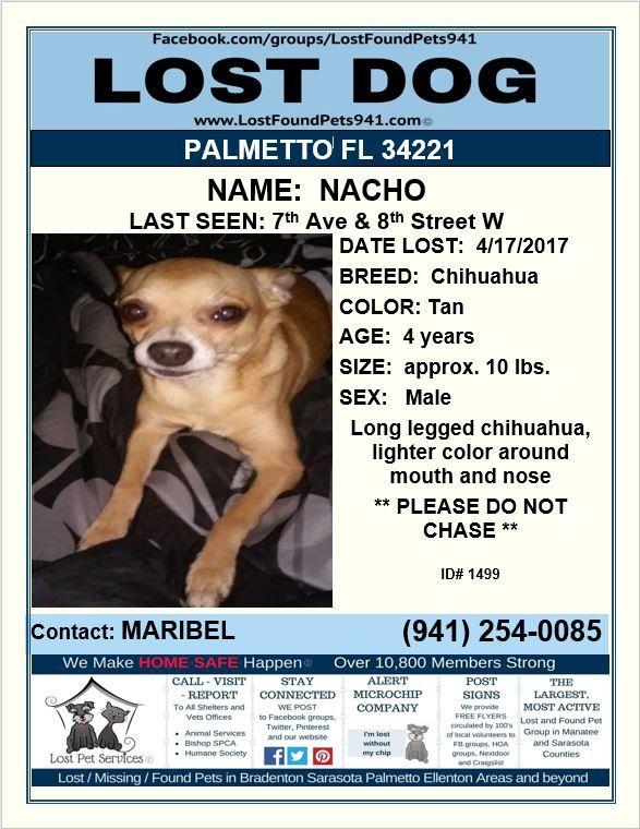 Have You Seen Nacho Lost Dog Chihuahua Please Rt Palmetto Fl