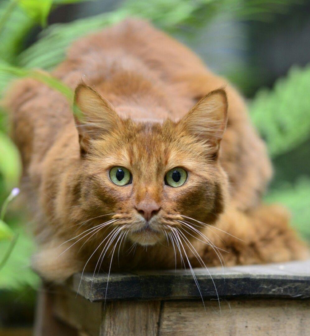 Firefern Cats, Cute cats, Kittens