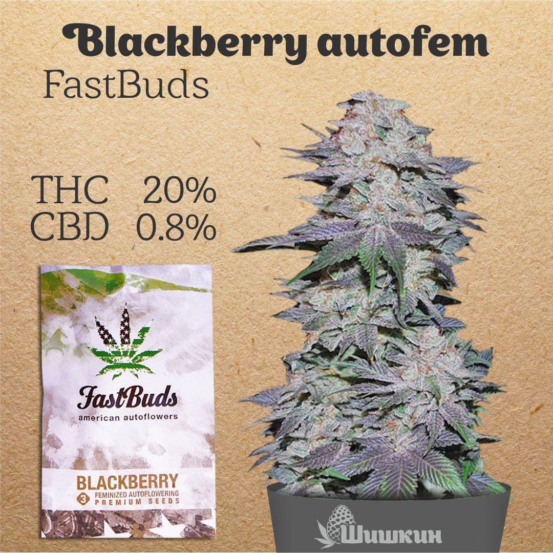Шишкин семена марихуаны что курить из куста конопли