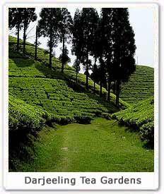 38d64fa075432d506aa06806e7ba2f71 - List Of Tea Gardens In Darjeeling
