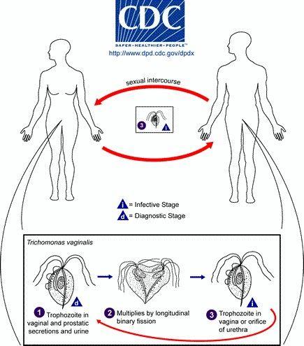 Trichomonas megjelenhet a kezelés után, A condyloma acuminatum tünetei, kezelése és megelőzése
