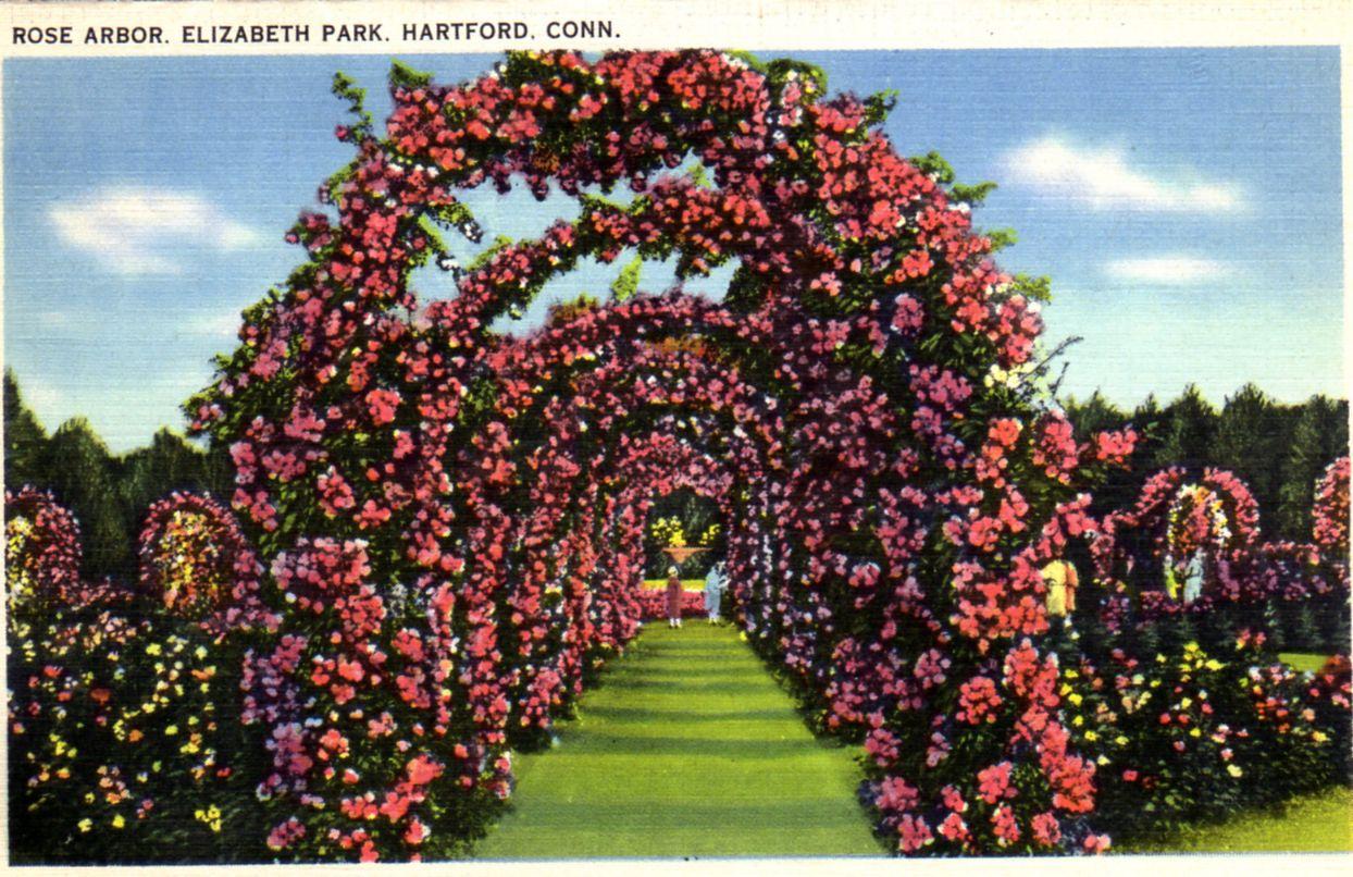 #antique #vintage #ephemera #gardenscape #roses (Elizabeth ...