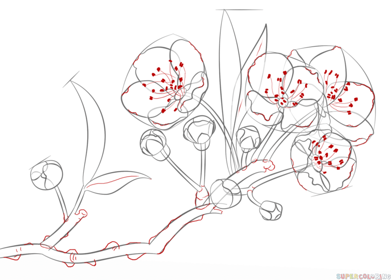 how to draw a cherry blossom step by step drawing tutorials for kids and beginners