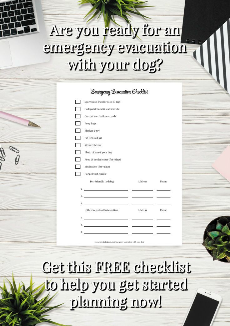 Are you ready for an emergency evacuation with your dog