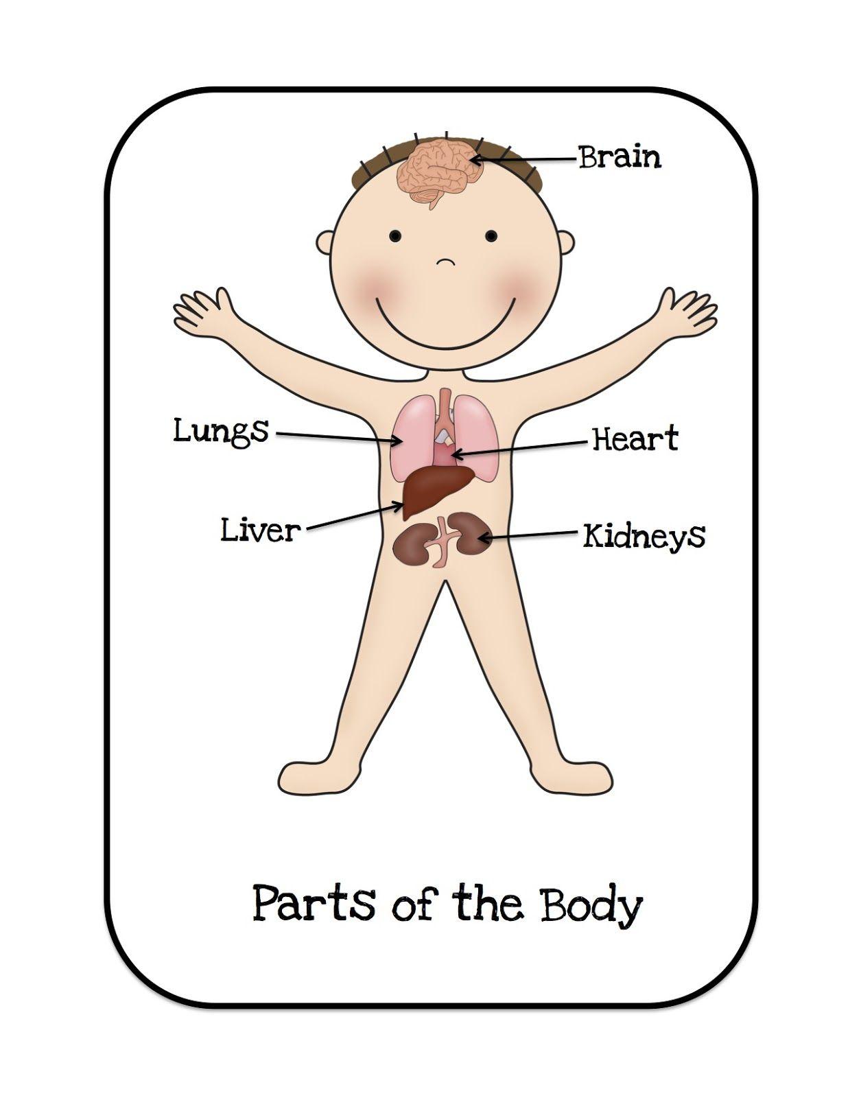 Preschool Printables: Organs