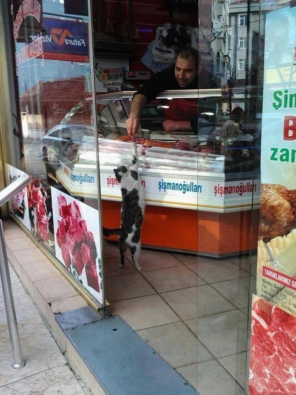 お肉くださいにゃ~。