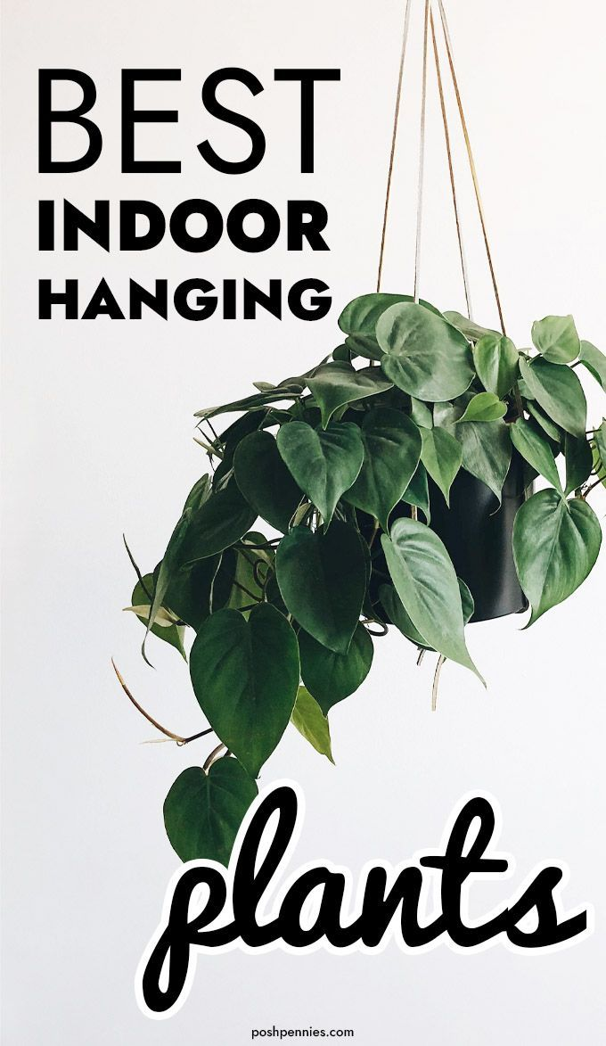 The Best 9 Indoor Hanging Plants Even A Beginner Won't Kill is part of Hanging plants indoor, Hanging plants, Best indoor hanging plants, Plant decor indoor, Plants, Easy care plants - A fantastic beginner's guide to easy care indoor hanging plants  Plus great ideas on how to hang your plants without making holes in the wall or ceiling!