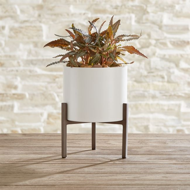 Dundee Small Tabletop Planter + Reviews | Crate and Barrel