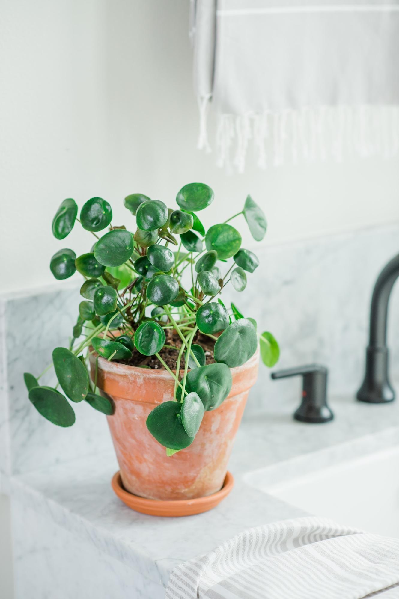 Photo of Best Houseplants for Your Bathroom   Magnolia