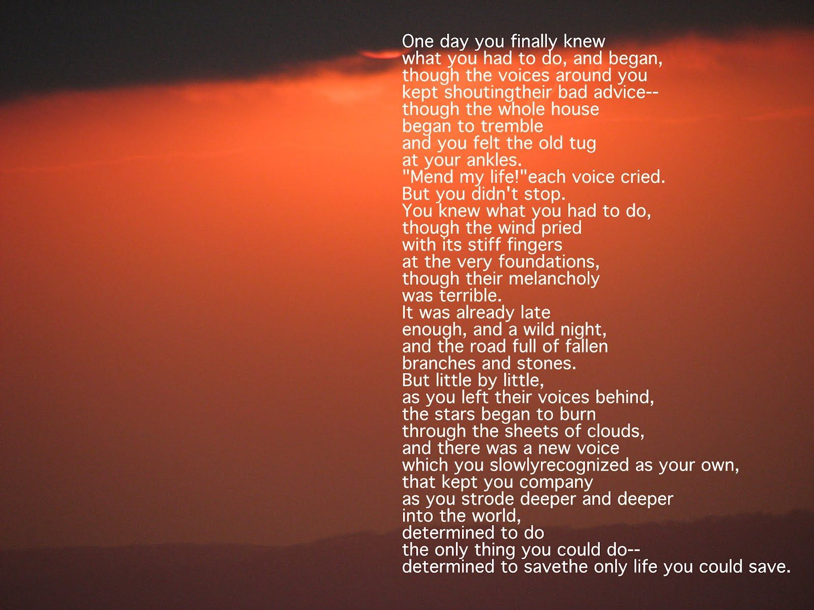 Mary Oliver Love Quotes Favourite Mary Oliver  Poetry And Prose  Pinterest  Mary Oliver