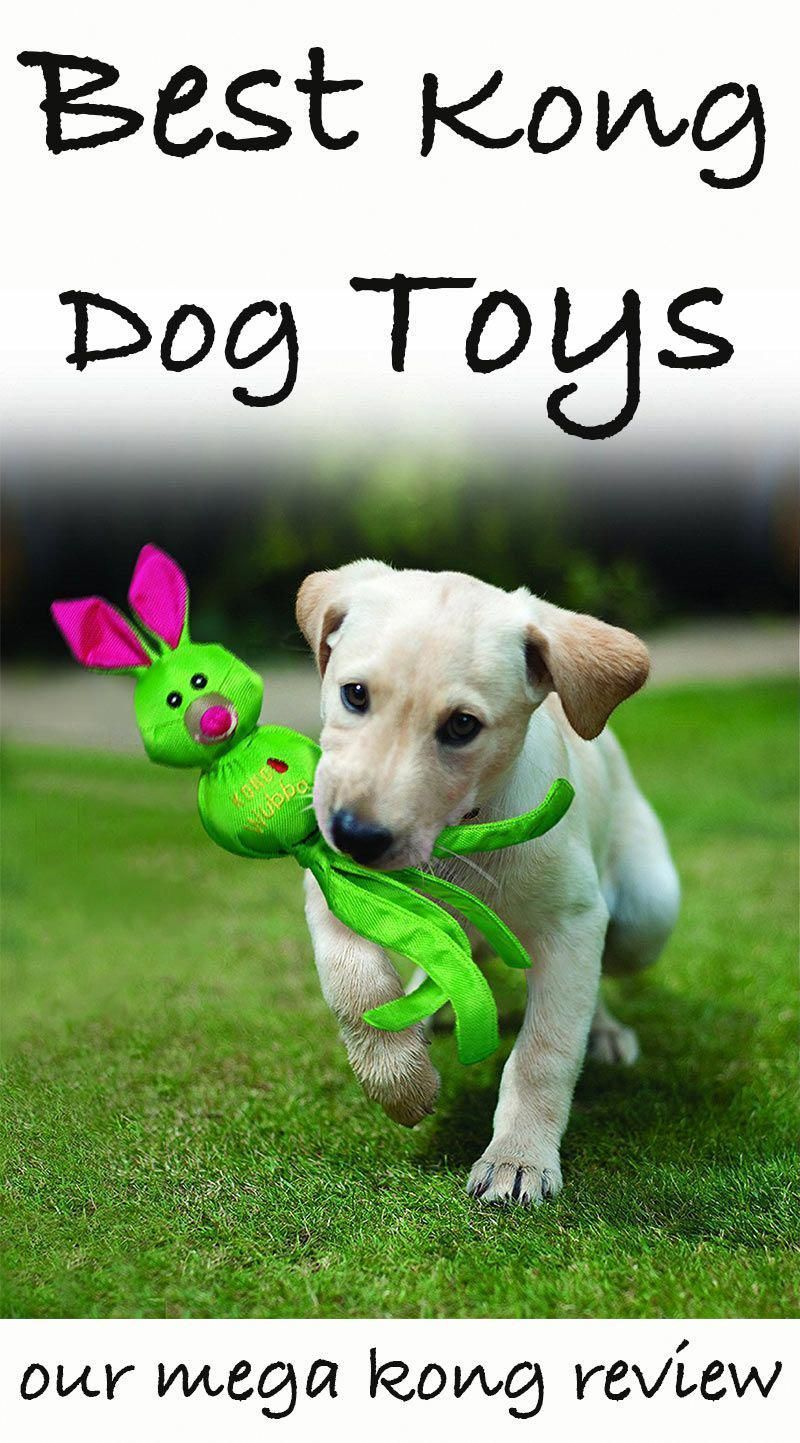 Best Kong Dog Toys For Labradors And Other Large Breeds