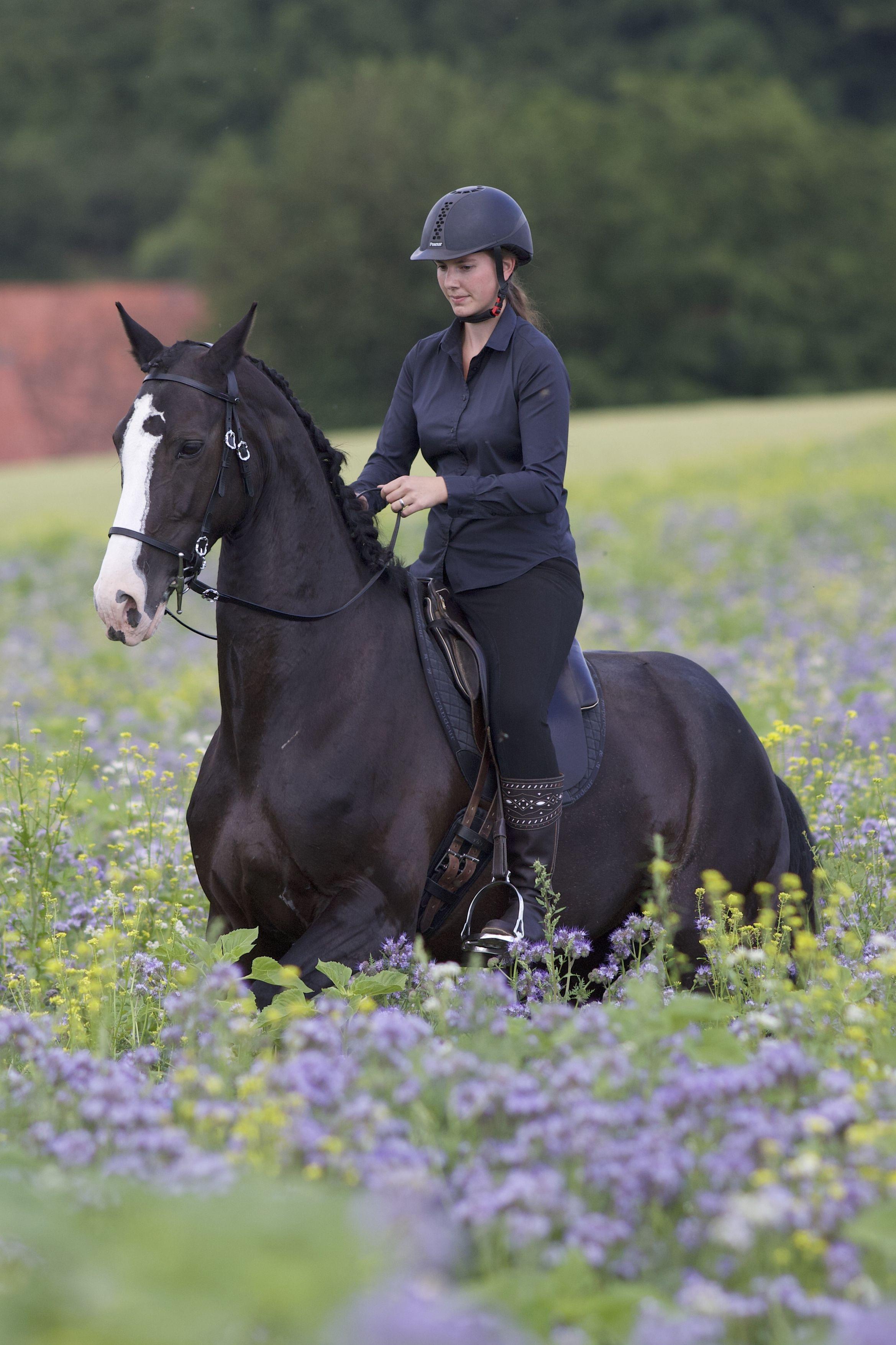 Auch Im Gelande Lassen Sich Lektionen Wie Das Schulhalt Uben Niedliche Pferde Pferdeliebe Reiten