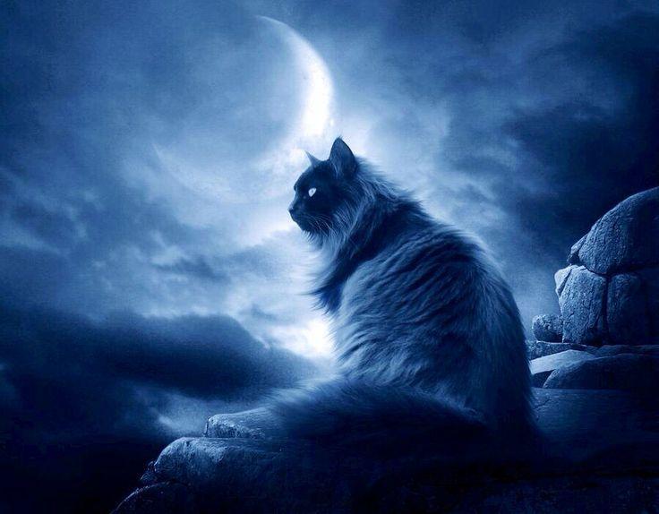 Starclan Warrior Cats Google Search Cats Warrior Cats Black Cat
