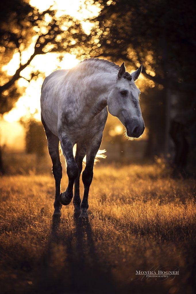 Pferdefotografie und Hundefotografie in ganz Deutschland und darüber hinaus. Outdoor- und Studiofotografie von Pferden und Hunden. Pferdefotografie - Hundefotografie - Mobiles Studio für Pferde - Pferde im Studio - Hundefotos - Pferdefotos