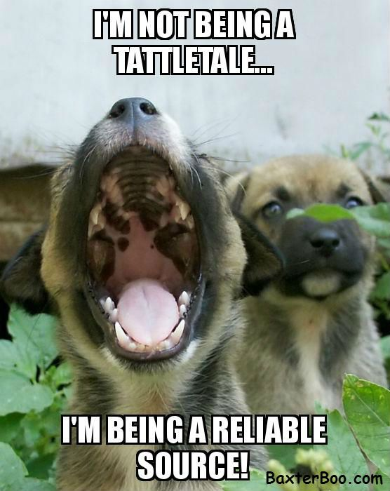 I M Not A Tattletale Dog Thoughts Funny Dogs Dog Training Barking