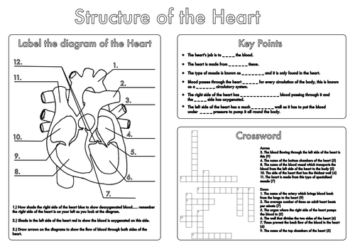 gcse biology heart and lung structure worksheets by beckystoke projects to try biology. Black Bedroom Furniture Sets. Home Design Ideas