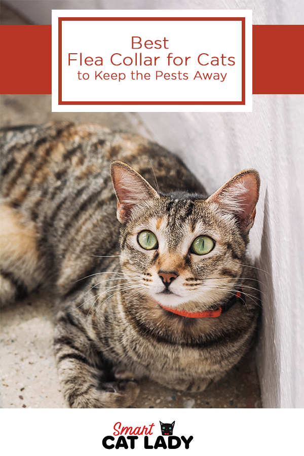 Best Flea Collar For Cats To Keep The Pests Away Cats Fleas Cat Facts