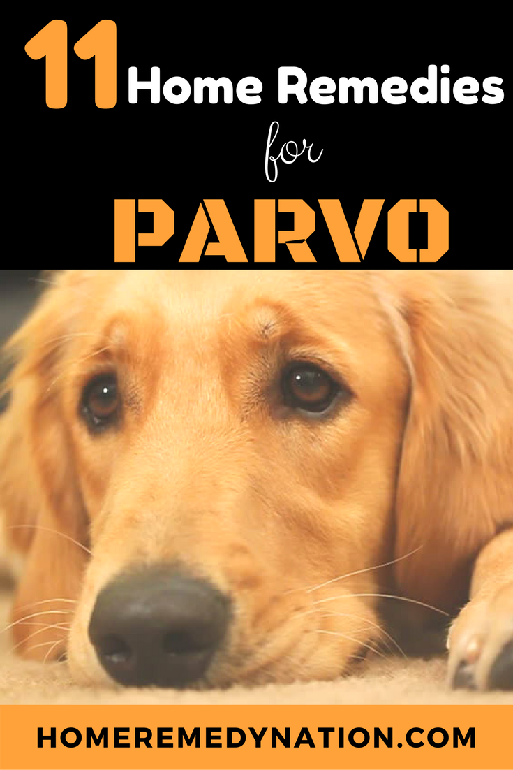 How To Treat Parvo In Dogs And Puppies 11 Home Remedies For Parvo Treatment Parvo Remedies Parvo Home Remedies
