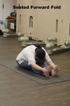 12 basic yoga poses  yoga  basic yoga poses yoga yoga