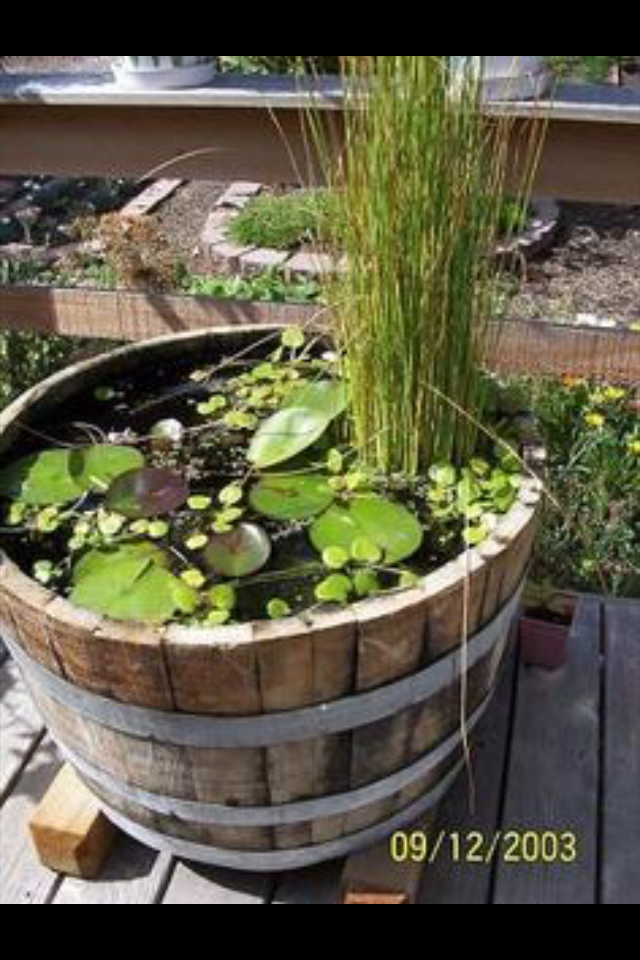 Pin by May Rodriguez on Gardening ideas | Pinterest | Water features ...