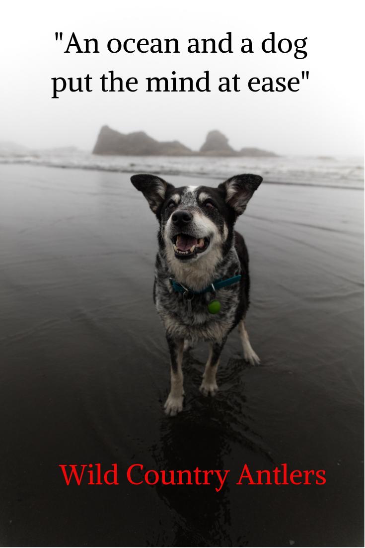 Dog Enjoying The Beach Dog Quotes Dogs Dog Life