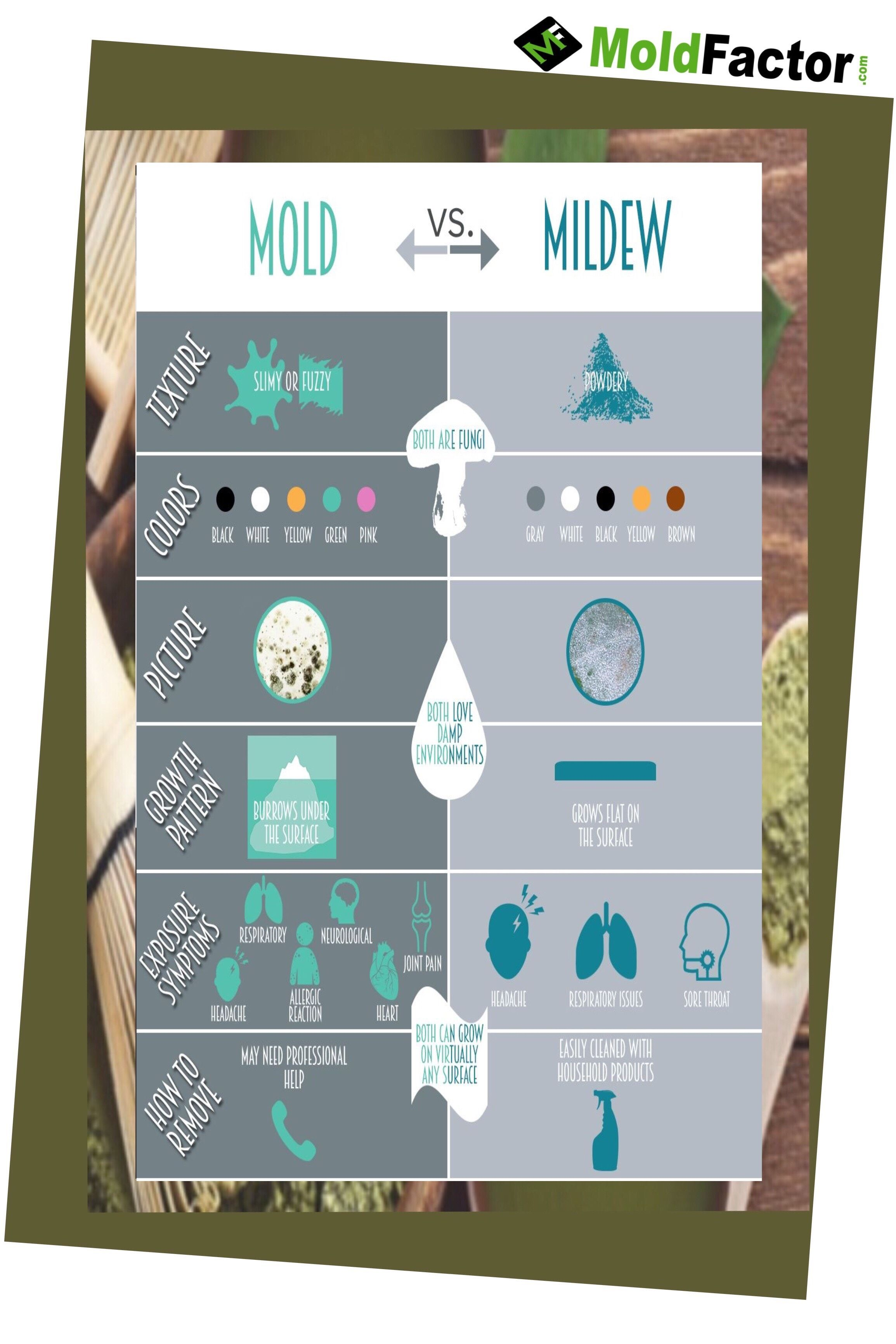 Pin On Mold Symptoms And Remedies