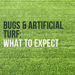 Bugs And Artificial Turf What To Expect With Images Artificial Turf Artifical Grass Turf Backyard