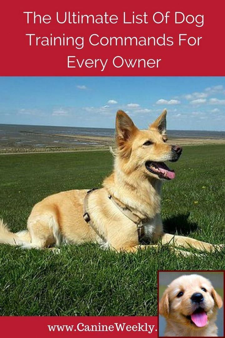 Dog behavior pictures and dog training courses montreal