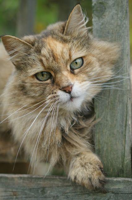 Amado Pin do(a) CoSchi❤ em *~Puurfect Cats~* | Pinterest | Gatinhos  QA93