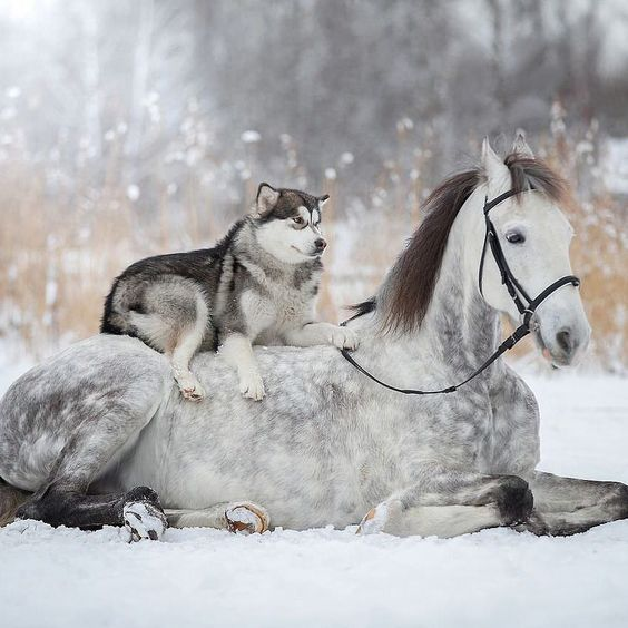 15 Cute Photos Of Horses And Dogs
